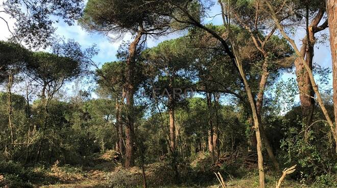 Taglio alberi pineta Procoio