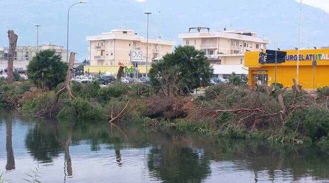 Strage di pini a Terracina, insorge l'ambientalismo locale