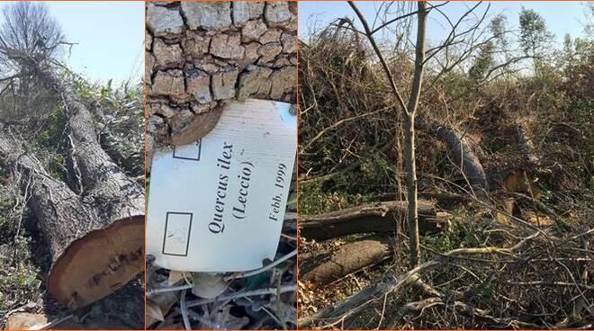 alberi tagliati fuoripista