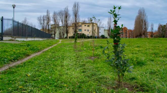 forestazione alberi