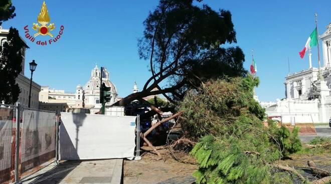 albero caduto piazza san marco