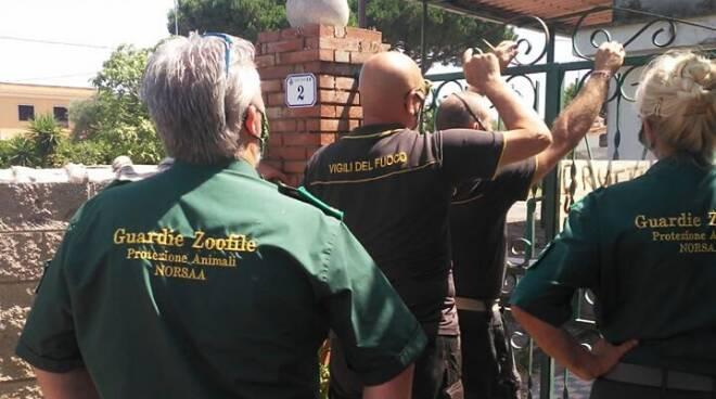 Guardie Zoofile Noorsa