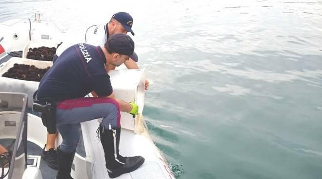 pesca abusiva ricci di mare