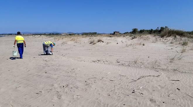 pulizia spiagge palidoro focene arrone