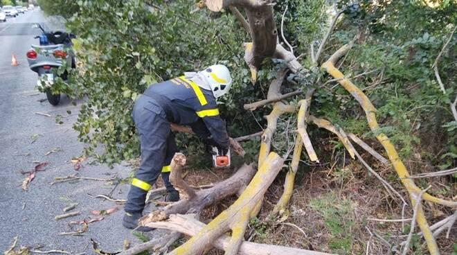albero caduto via portuense