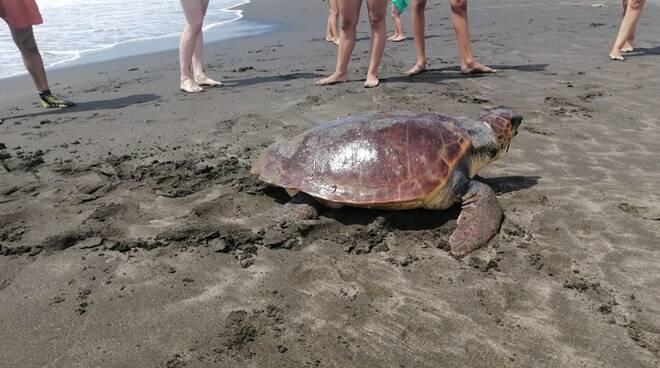 Tartaruga marina Ladispoli