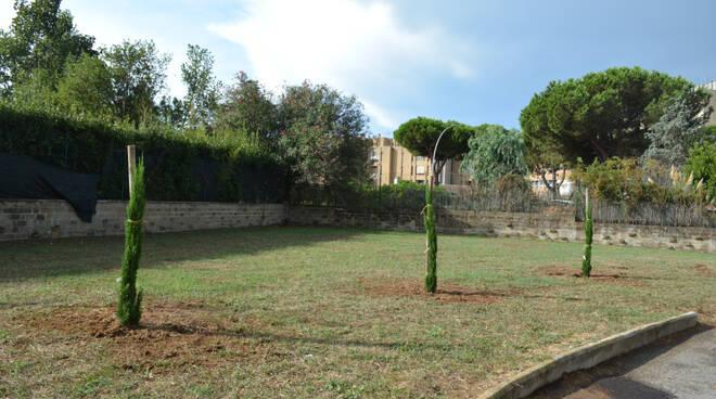 alberi liceo pascal