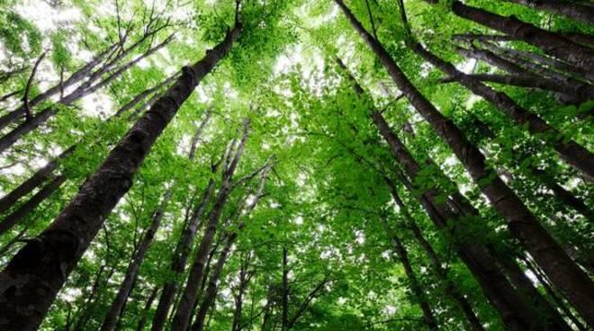 bosco, ambiente