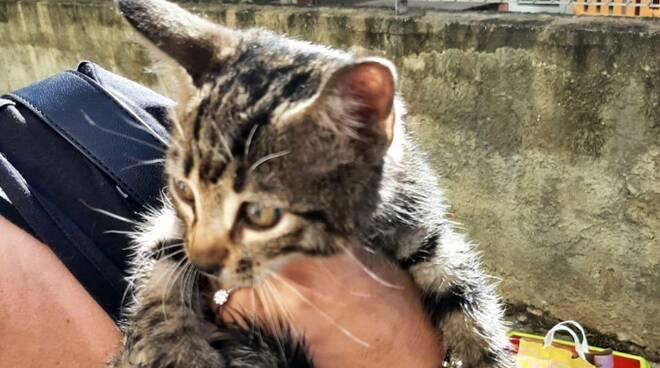 gatto civitavecchia