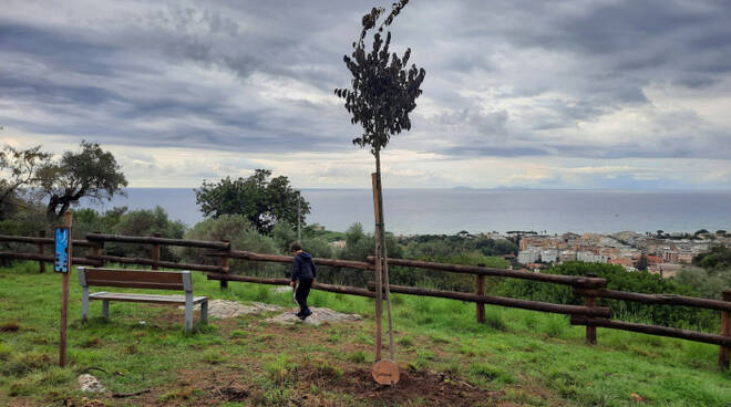 targa in ricordo di Iudicone Terracina