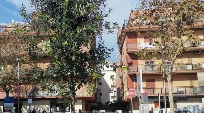 alberi Pomezia