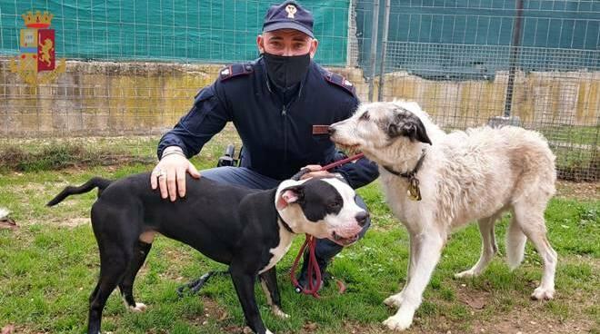 cani maltrattati polizia roma