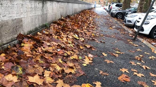 foglie lungotevere roma