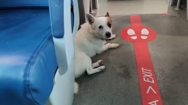cane impaurito