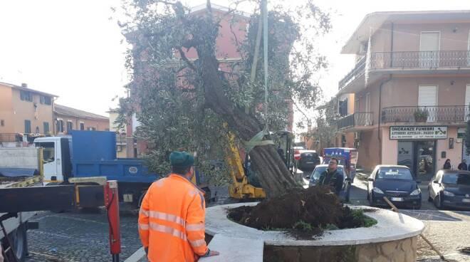 donazione albero Ardea