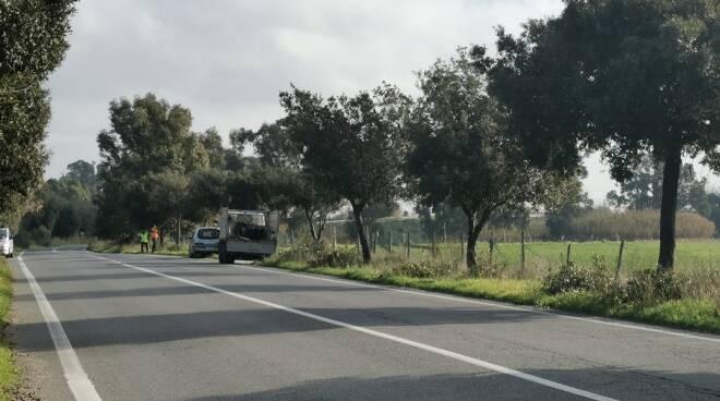 potatura alberi viale maria maccarese