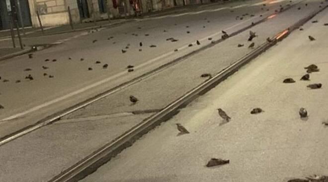 uccelli morti capodanno roma
