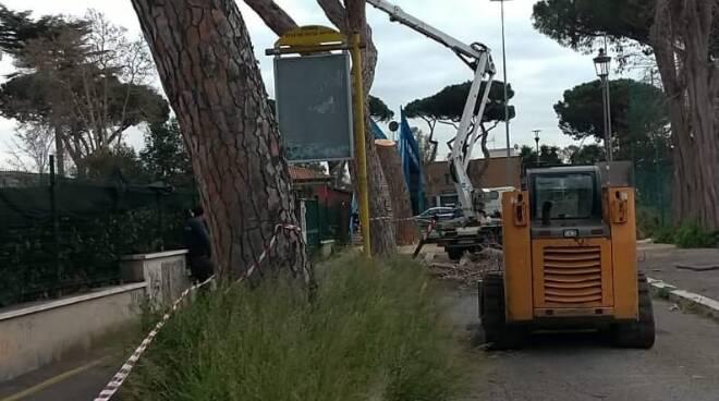 abbattimento pini Ostia Antica