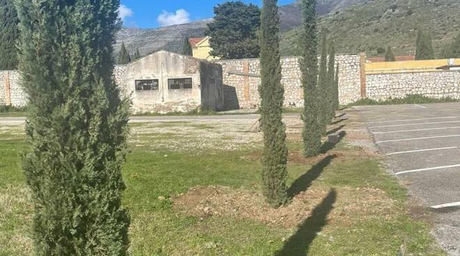 cipressi piantati al cimitero di Fondi