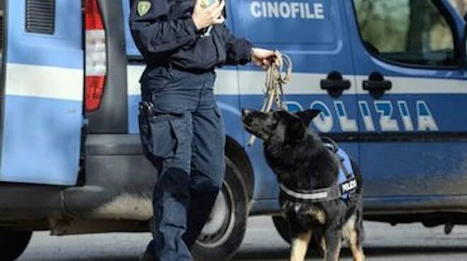cani antidroga polizia
