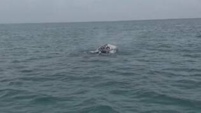 balena Fiumicino