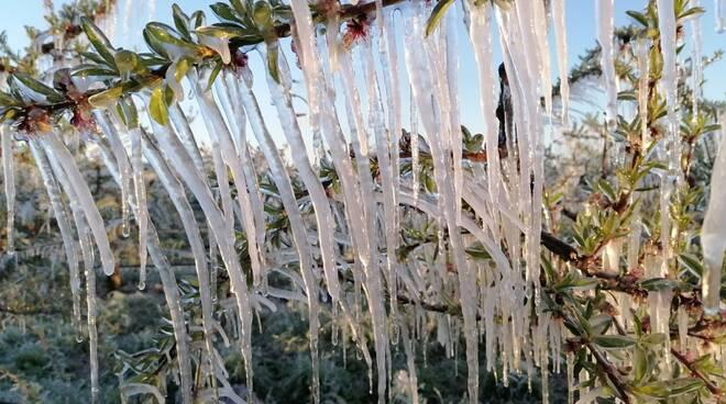 danni gelo agricoltura
