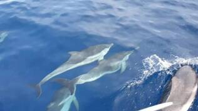 delfini Santa marinella