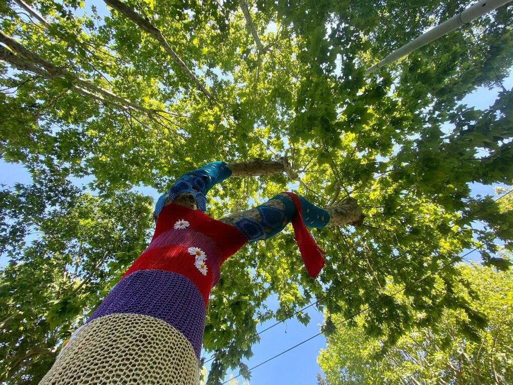 albero rino gaetano roma