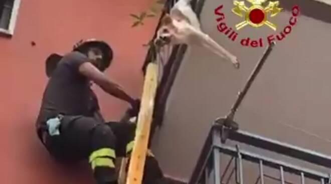 cagnolino in bilico salvato dai vigili del fuoco