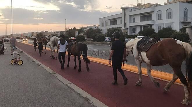 cavalli pista ciclabile ostia