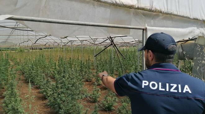 marijuana in serra latina