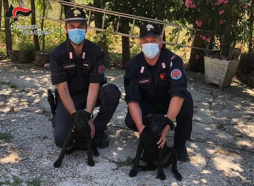 carabinieri cuccioli cane