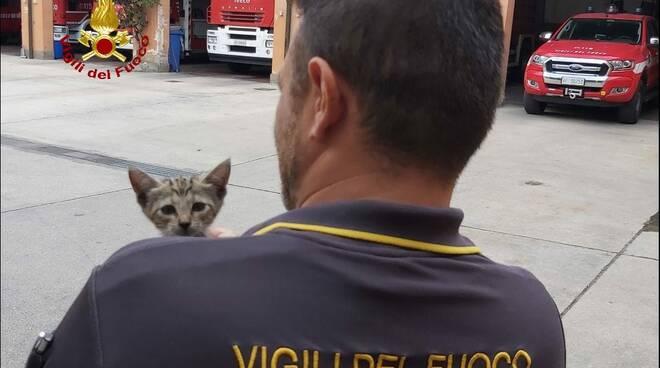 vigili del fuoco e gatto