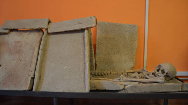 scheletro museo lavinium