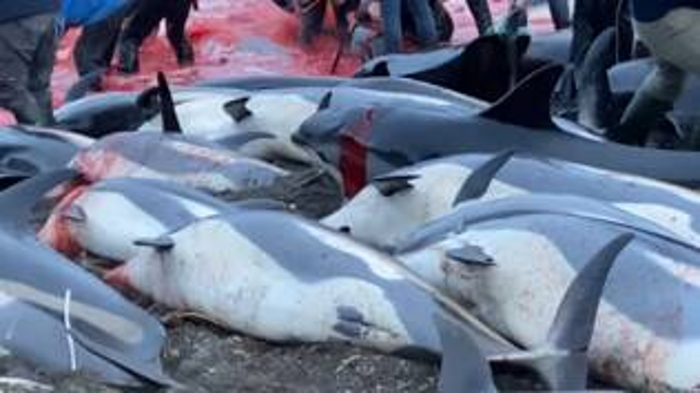 strage delfii