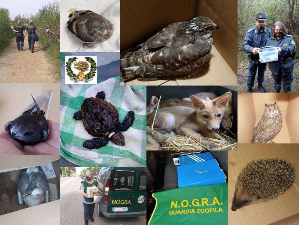 fauna in difficoltà