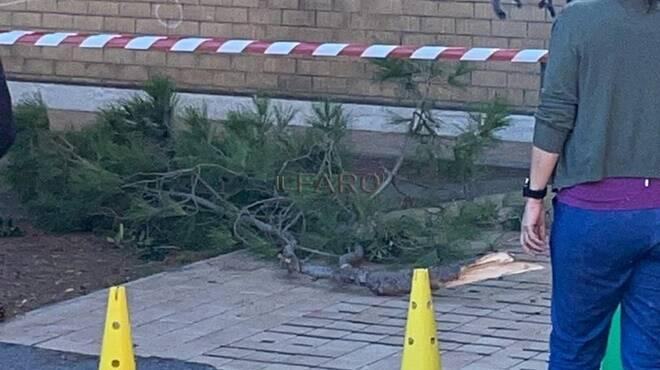 ramo caduto scuola lido del faro isola sacra fiumicino