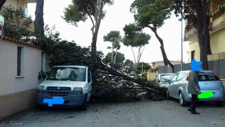 Fermo, forte vento, alberi abbattuti e disagi