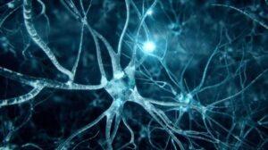 neuroni-3d